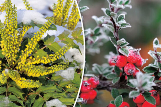 Alan Titchmarsh: Don't festoon your foliage with fancy fairy lights this christmas   Garden   Life & Style