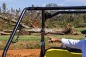 Another Storm Victim — Pecan Groves In Southwest Georgia : The Salt : NPR