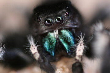 This Halloween, Consider the Unappreciated Beauty of Spiders