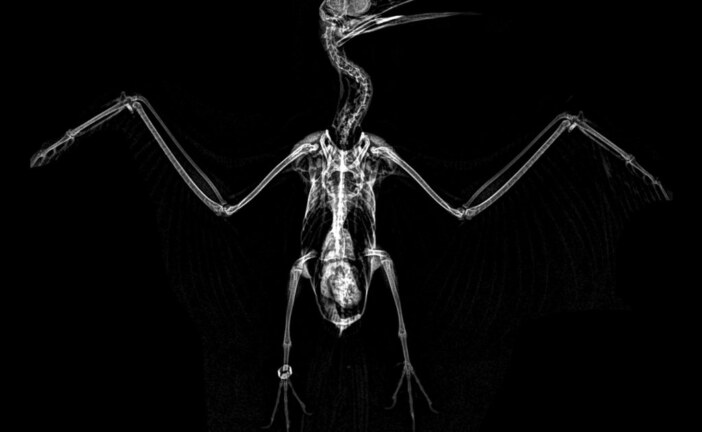 Oregon Zoo Shares Spooktacular Animal X-rays