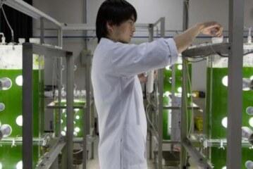 Algal Biofuels Dead? 'Not So Fast', Says Algal Biofuel Researcher