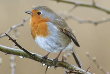 Win a £100 wilko voucher by photographing a bird in your garden