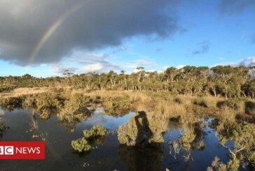 Wetland mud is 'secret weapon' against climate change