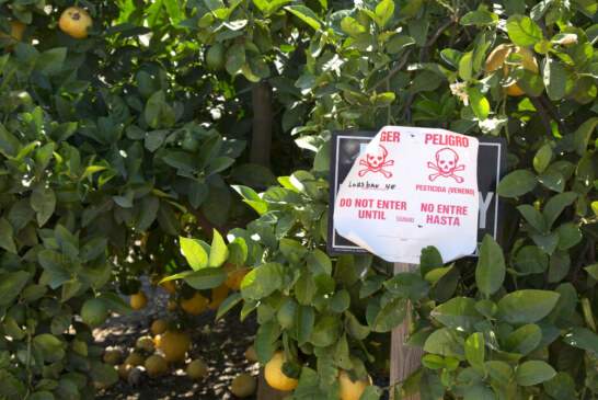 Pesticide Poses Health Risks. Will Appeals Court Make EPA Ban It? : The Salt : NPR