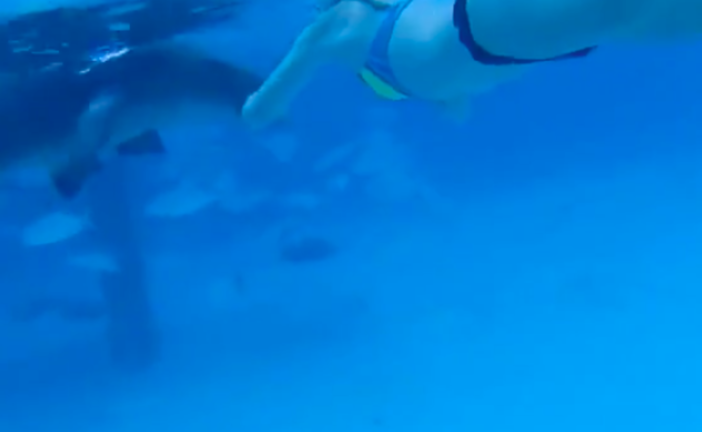 Nurse Shark Bites Honeymooner, Leaves First Aid To Husband