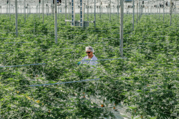 High Demand and Short Supply in Canada's Legal Cannabis Trade