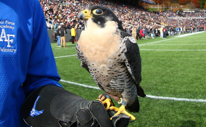 Air Force Academy Falcon Injured During Weekend of Football With Army