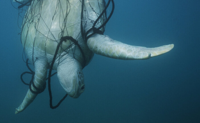 Rescuing Sea Turtles From Fishermen's Nets