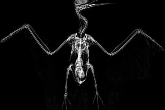 Oregon Zoo Shares Spooktacular Animal X-rays