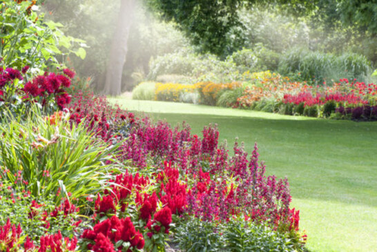 Hosepipe ban 2018: How to maintain your garden during a heatwave