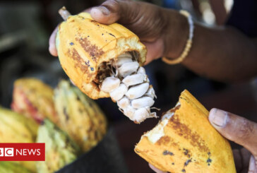 Chocolate: Origins of delicacy pushed back in time