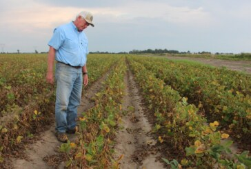 The EPA Says Farmers Can Keep Using Dicamba, A Drift-Prone Weedkiller : The Salt : NPR