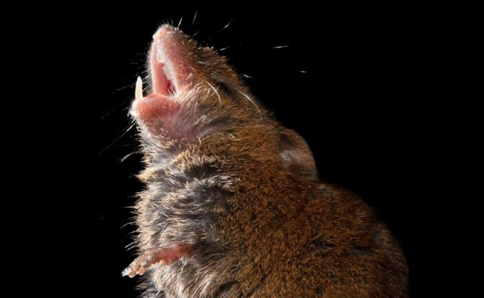 These Mice Sing to One Another — Politely